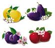 set of ripe plums