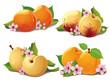 set of ripe apricots
