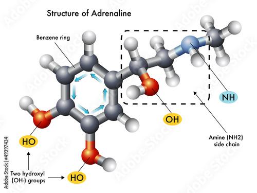 struttura adrenalina
