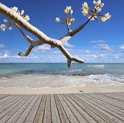 esplanade de bord de mer, île Maurice