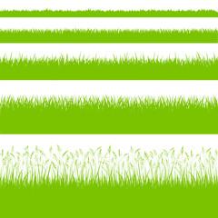 Gras Gräser Wiese