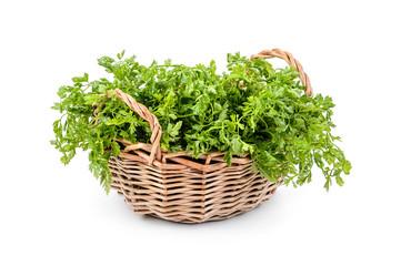 Cilantro (coriander) in a basket