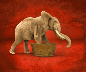 Elefante dentro una Bañera