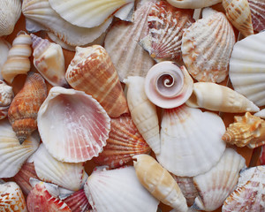 Variety of colorful sea shells closeup, marine background