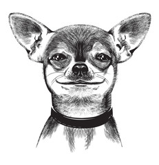 Dog Chihuahua. Illustration