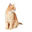 Cat portrait.