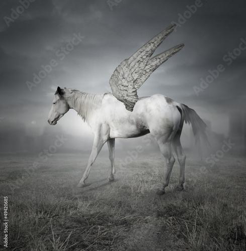 Fototapeten,pferd,tier,weiß,belle