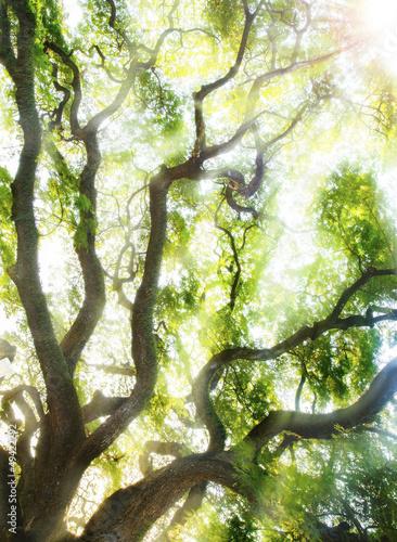 Fototapeten,hintergrund,grün,baum,wild