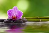 Fototapety orquidea, piedras, bambú y agua