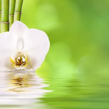 flor y bambú, spa