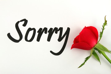 Sorry with red rose