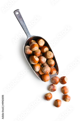 hazelnuts in metal scoop