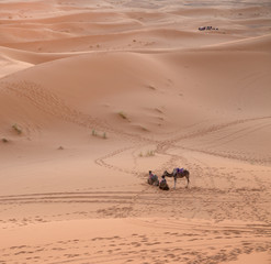 Camels and cars, the past, the future