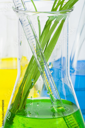 Green plants in laboratory equipment
