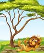 A king lion lying down near the tree