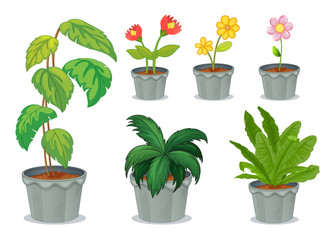 Six pots with plants