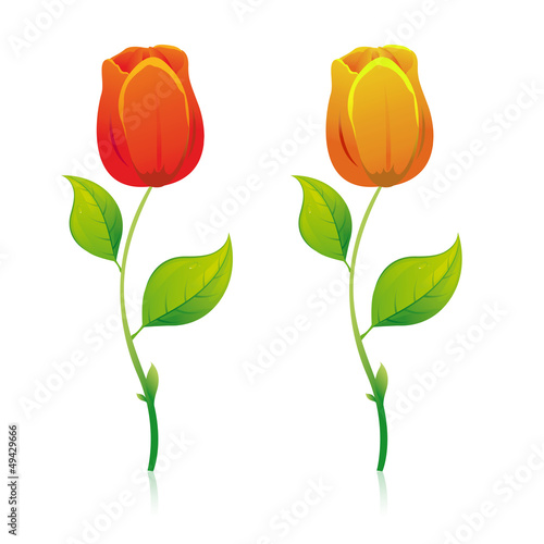 Tulipes rouge et orange