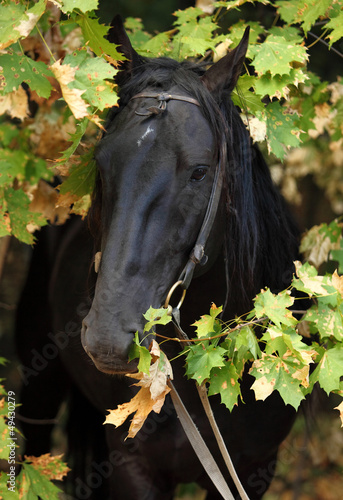 Thoroughbred horse portrait