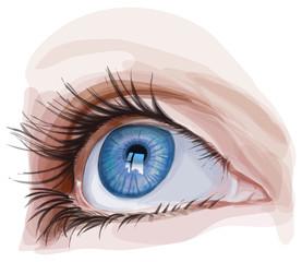 blue eye - vector illustration