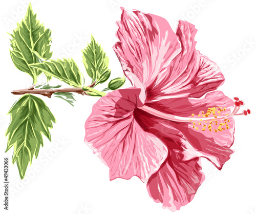 Hibiscus flower - vector / eps10