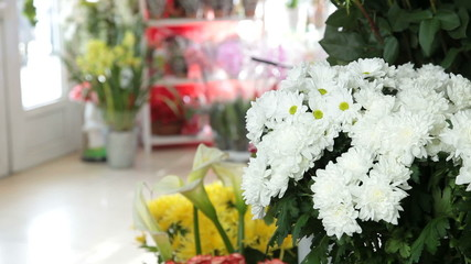 Chrysanthemums In Flower Shop