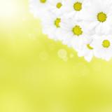 Fototapeta rumianek - streszczenie - Kwiat