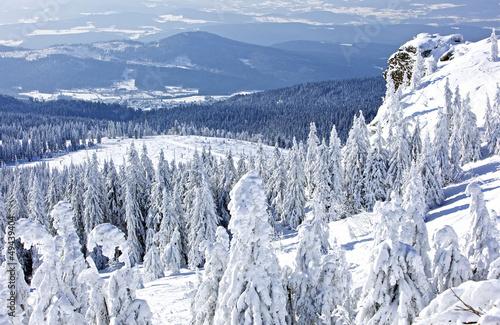 Winterlandschaft am grossen Arber, Bayerischer Wald - 49439404