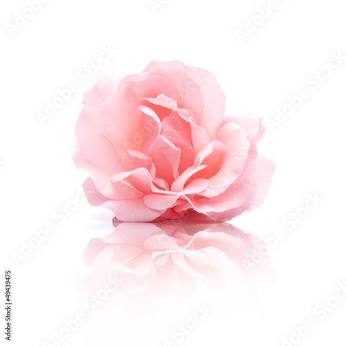 Canvas Rozen Rosa Rosenblüte
