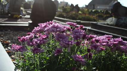 chrysanthemums autumn flowers cemetery graveyard grave monuments