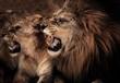 Fototapeten,angriffslustig,tier,löwe,löwin