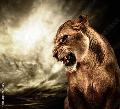 Świetny lwica przed burzliwe niebo