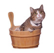 pet in wooden bowl