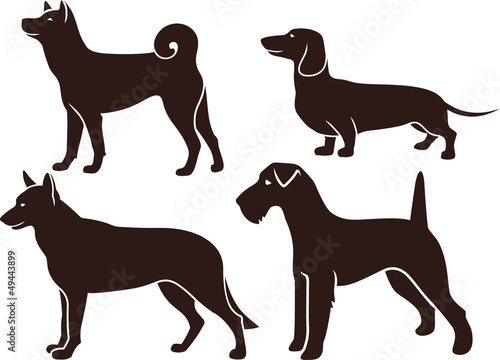 Set of images of dogs
