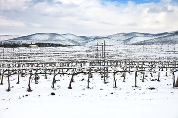 Vineyards covered by snow in winter. Chianti, Florence, Italy