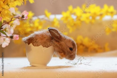 Kaninchen schlüpft aus Ei