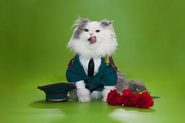 Cat dressed as General