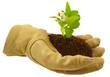 concept nature protégée, branche fleurie d'agrume