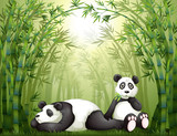 Two pandas in the bamboo forest