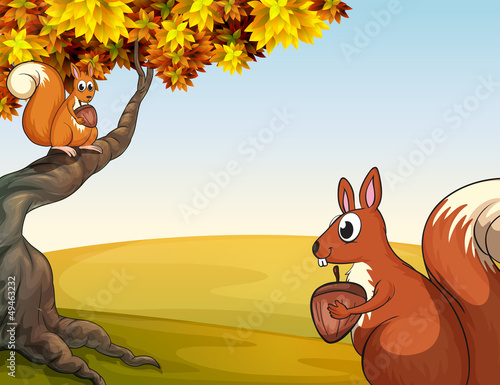 Squirrels with nuts in the hill