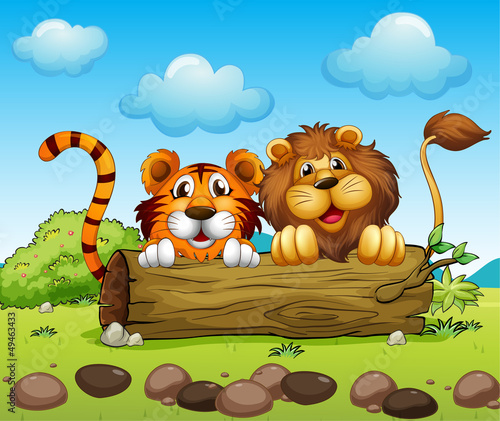 A lion and a tiger hiding