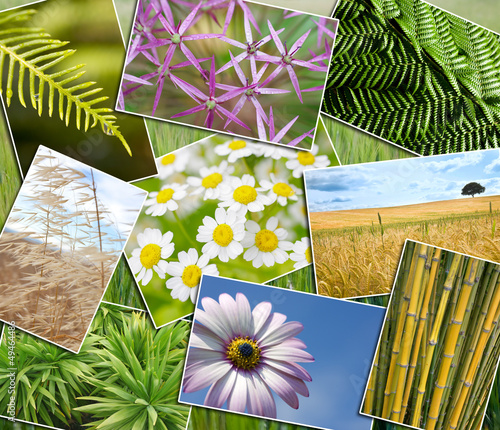 Natural Green Environment Plants Field Flowers Montage