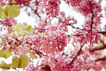 Fiori di albero in primavera_06