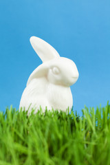 China bunny is in the thick green grass, isolated on blue