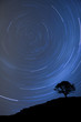 isolated tree silhouette at night with startrail