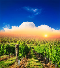 Country landscape vineyard