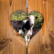 Vaches, fond coeur bois