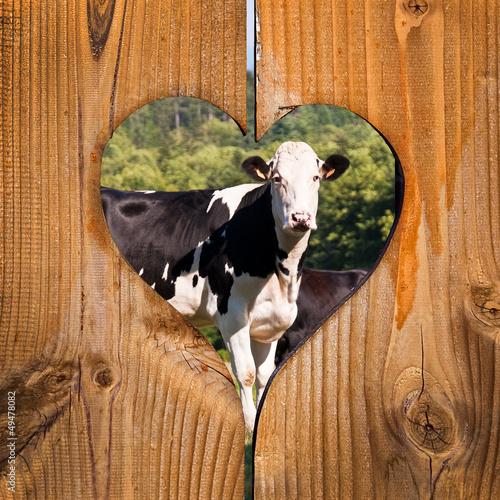 Papiers peints Vache Vaches, fond coeur bois
