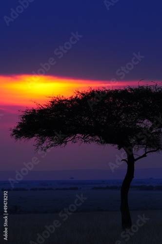 Silhouette of acacia tree at african sunset
