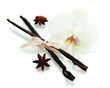 Vanilla pods and anise with flower isolated on white