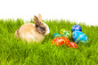 Easter egg and bunny on grass
